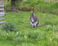 Tierpark Irchenrieth