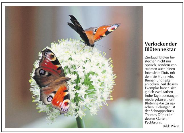Erschienen in Der Neue Tag am 23.08.2014